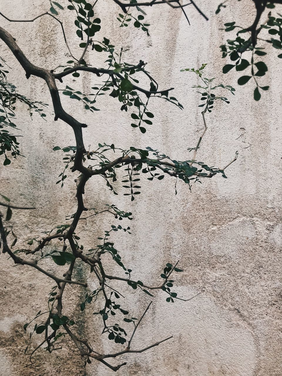 plant, growth, no people, wall - building feature, day, nature, built structure, tree, architecture, plant part, close-up, leaf, beauty in nature, outdoors, wall, full frame, branch, textured, sunlight, pattern, concrete