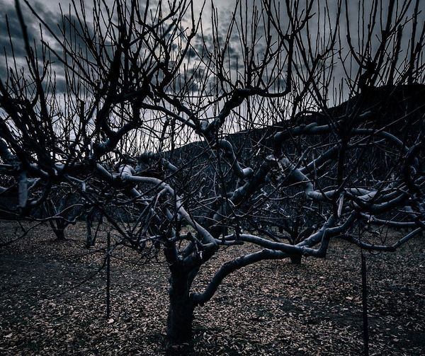 Spend the night with me! Tree Branch No People Nature Outdoors Beauty In Nature Photography Nikonphotography Sigma Lens Landscape Photography Spooky Dark Scenics Landscape Nature Nikonphotographer Beauty In Nature Ominous Beauty