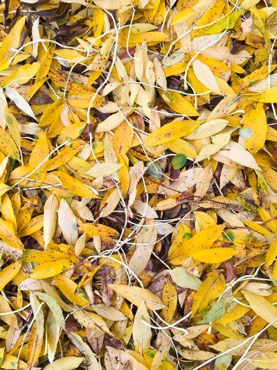 Full frame shot of dry leaves on field