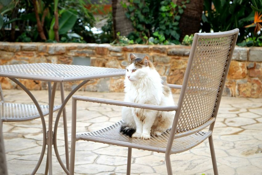 EyeEm Selects One Animal Domestic Cat Chair Day Pets Animal Themes No People Sitting Outdoors Mammal Domestic Animals Portrait Nature Ozean Greece Crete Sun Photography Photooftheday Photographer Nature Young Animal Happy Fun