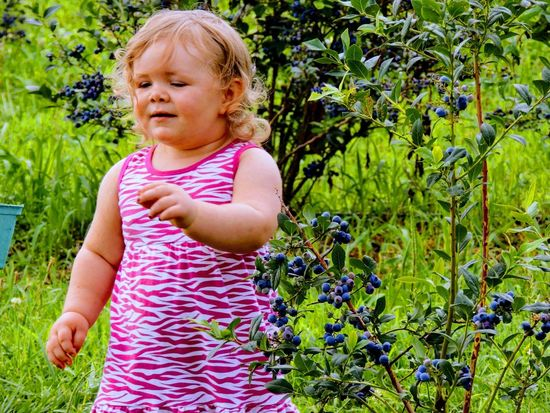 EyeEm Selects seeing blueberries for first time Baby One Person Babies Only Outdoors Childhood Day Growth Cute Smiling Happiness Nature Grass Todler Blueberry Summertime Seasons
