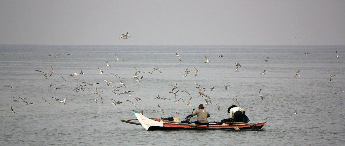 Rear view of men in boat fishing by birds on sea