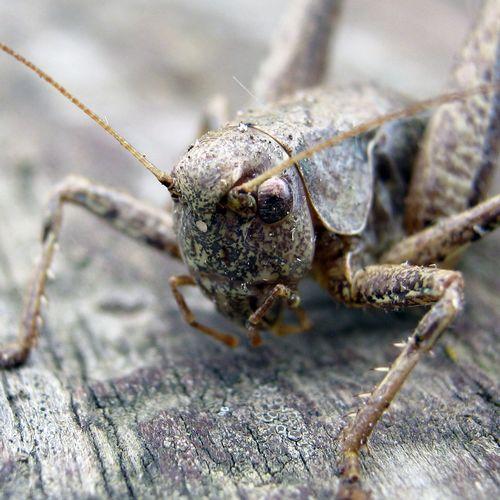 moody cricket