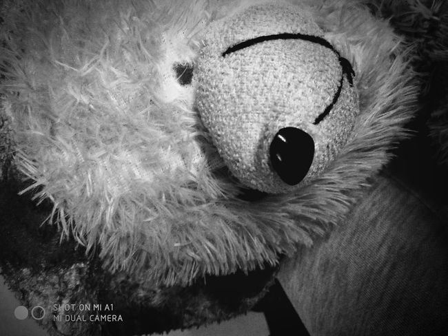Creepy Creepy Face Creepy Toys Creepy Doll Cuteeee♥♡♥ Looking At Camera Be Impressed Devil Evil Evil Eye Evil Smile Evil Night Lowlight Photography One Animal Close-up Indoors  Feather  Animal Themes No People Night