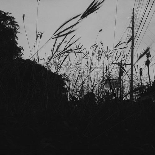 • 'cause grass grow all around • B&W • Wildestdreams Vscocam VSCO Vscogood Vscophile Vscography Vscogram Vscophotos Vscoadventure Vscograss Worldbalance Vscolike Vscofollow Followvsco Likevsco Instalike Likeforlike Like4like L4l