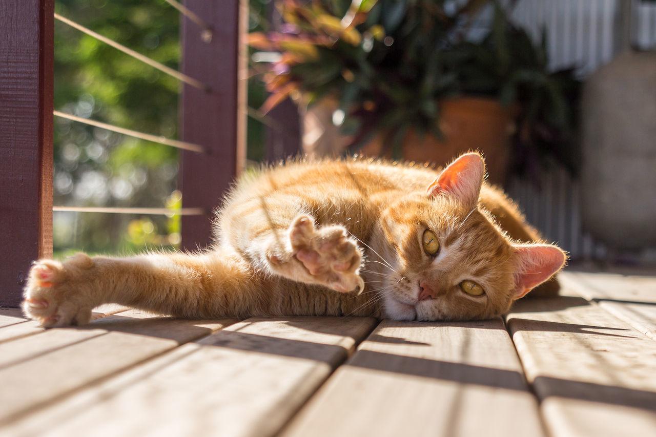 Cat Relaxing On Floor