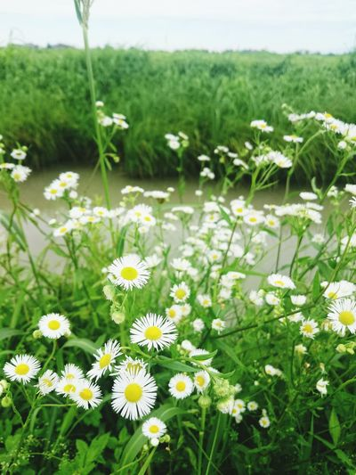 Little Flowers Enjoying Life