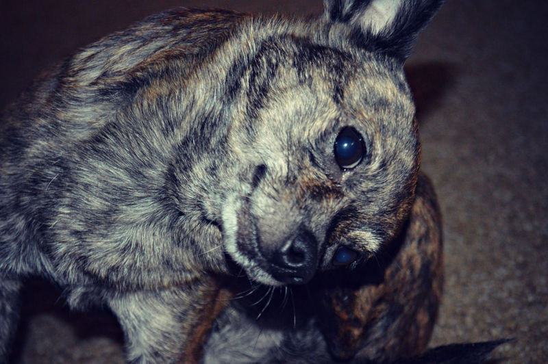 Dog Animal