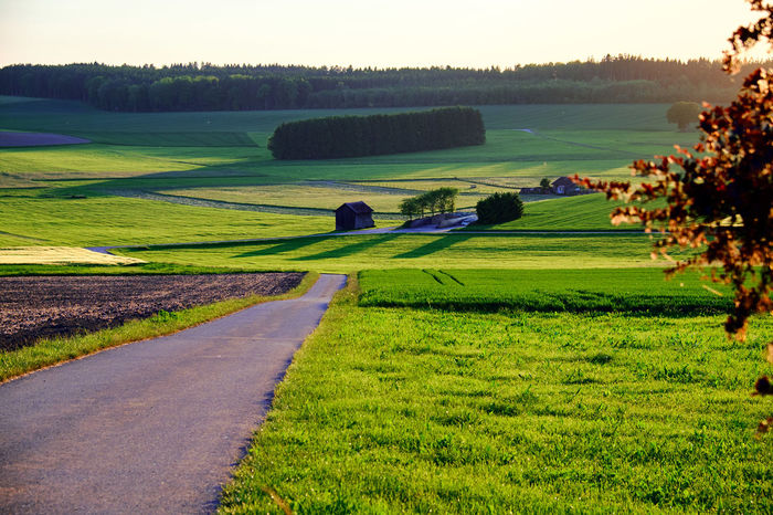 Schwabissch Alps - Beauty In Nature Countryside Day Field Golf Course Grass Green Green Color Growth Landscape Nature No People Outdoors Past Rural Scene Scenics Summer Tranquil Scene Tranquility Tree