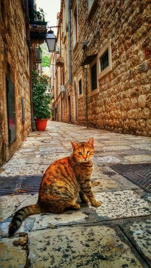 Croacia Cat Hanging Out Streetphotography EyeEmBestPics Hello World Cats Taking Photos Dubrovnik Life Street Photography