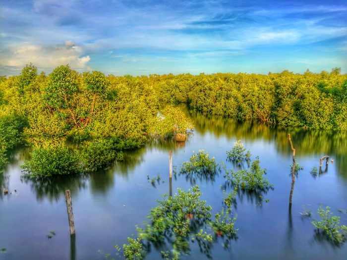 Mangrove Forest Tree Water Blue Sky Landscape Plant Life Lotus Water Lily Water Plant Pond Floating