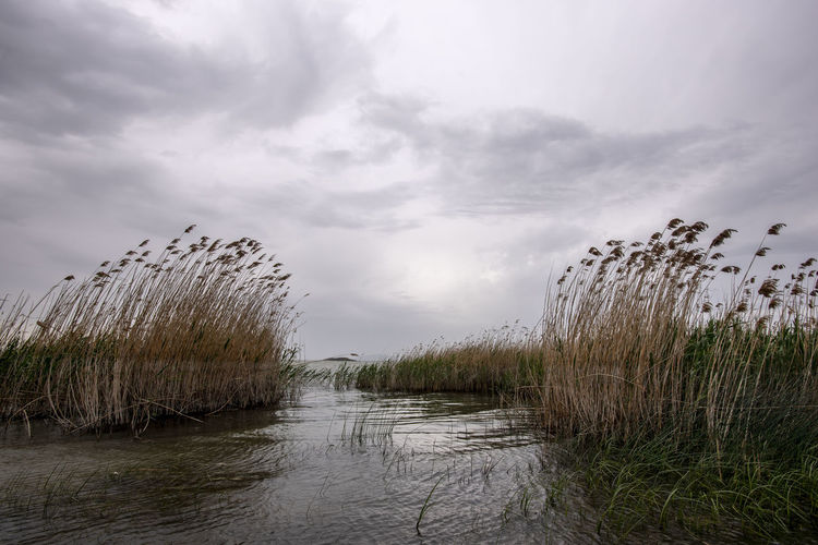 Cloud - Sky Sky Beauty In Nature Water Tranquility Plant Grass Scenics - Nature Tranquil Scene No People Nature Day Non-urban Scene Outdoors Environment Land Lake Overcast Swamp Marram Grass