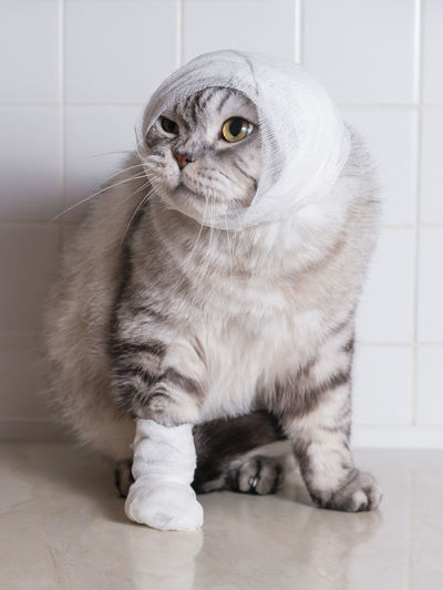 Close-Up Of Cat With Bandage