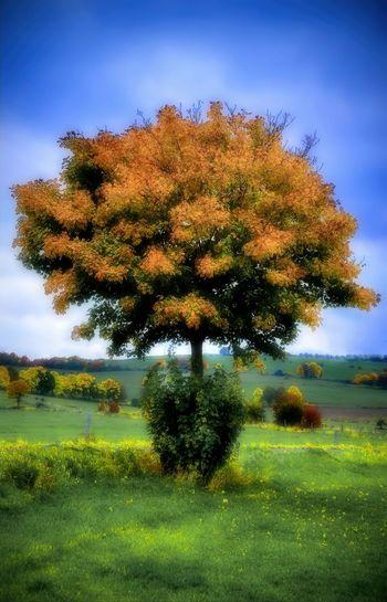 Autumn Colors Eifel Germany End Of Summer ArtWork Oel