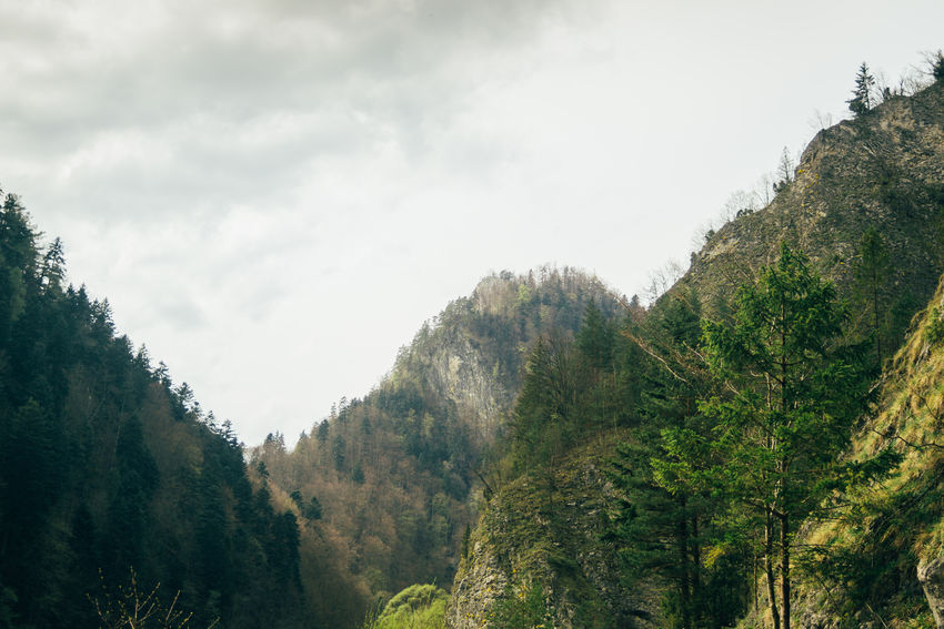 Forest Green Landscape Mountain Nature Outdoors Pieniny Poland Scenery Scenics