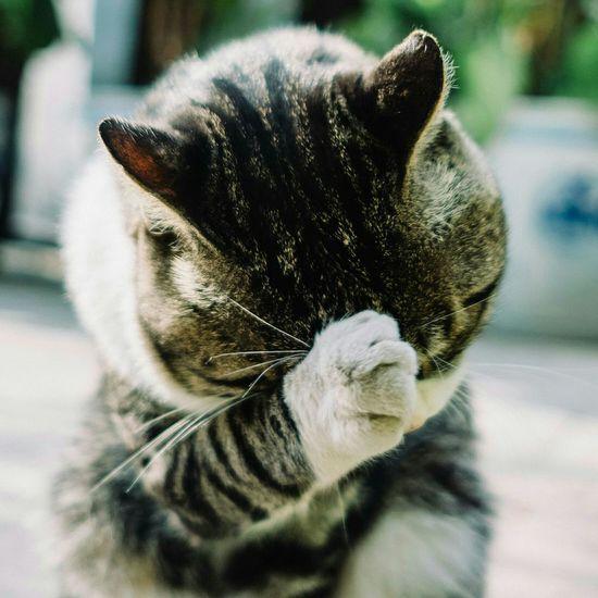 homeless cat. Fujifilm Fujifilm_xseries Fujifilm X-E2 Streetphotography Animal Themes Pets Domestic Animals Cute Homeless Cats Cats Of EyeEm