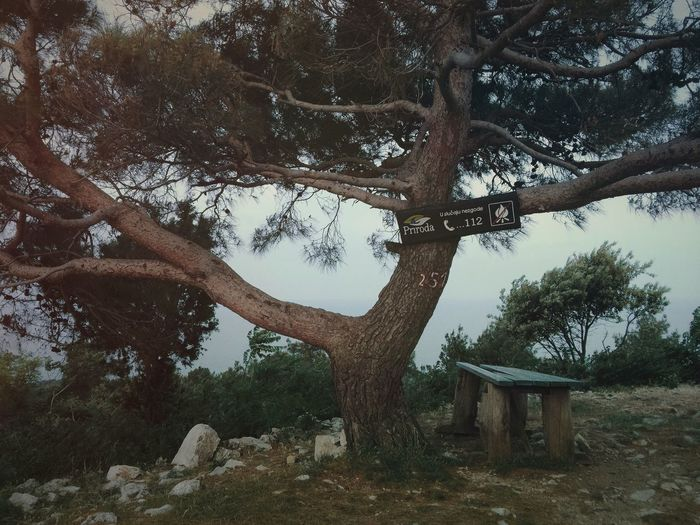 Emergency tree. Emergency Tree Nature Landscape Bench Chilling Chill Rest Resting Summer