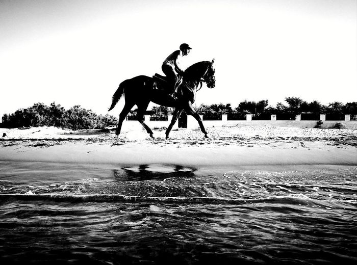 Horse Horseback Riding Silhouette Riding Water Only Men Sea Domestic Animals Beach Adult One Man Only Mammal People Outdoors Adults Only Animal Themes Sky Day One Person