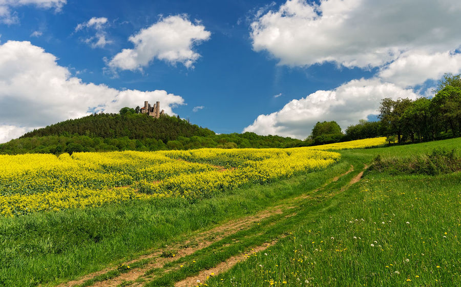 Agriculture Burgruine Hanstein Deutschland Rapsblüte Rapsfeld Thuringia Agricultural Land Beauty In Nature Burg Hanstein Castle Hanstein Cloud - Sky Coleseed Field Germany Green Color Hanstein Landscape Nature No People Raps Rural Scene Scenics - Nature Summer Yellow