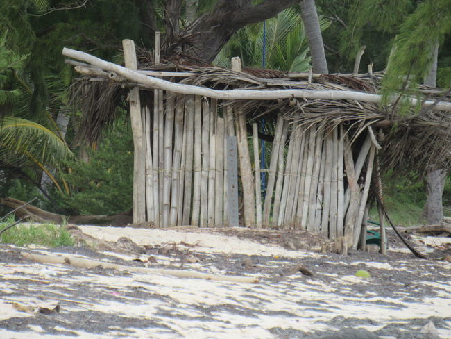 Tree Wood - Material Day Outdoors No People Nature Beauty In Nature Punta Cana Republicadominicana Bois Flotté Cabane