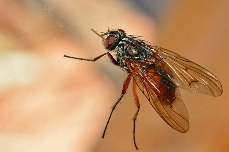 Macro Close-up Mouche Fly Nature Photography Macro_collection Close Up Instect Nature Nature On Your Doorstep