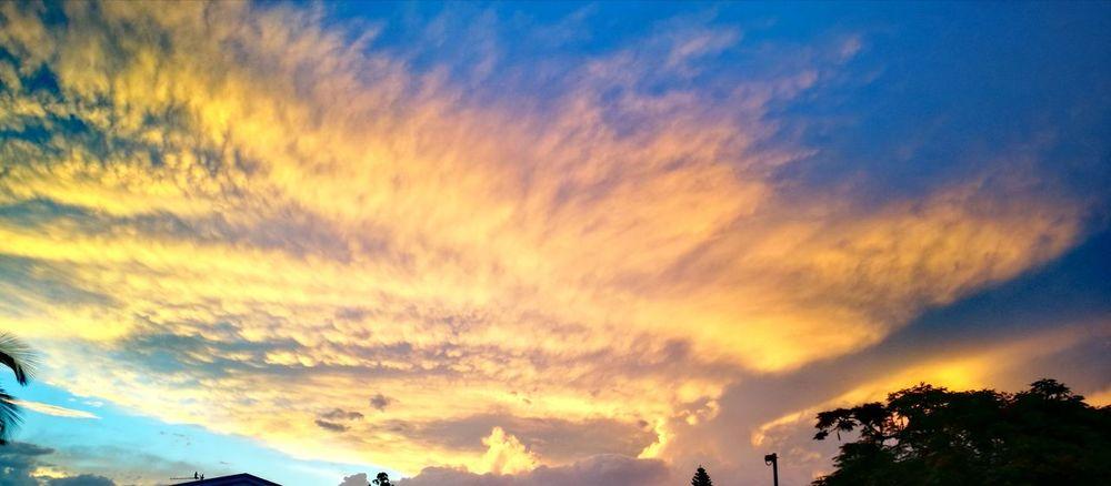 Cloud - Sky Sky Tree Scenics