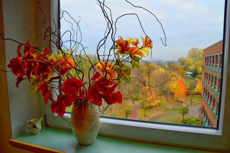 Close-up of orange flowering plant against window at home