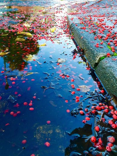 Showcase: November Water Reflections Puddle Puddle Reflections Puddlewonderfulphoto Autumn Autumn Leaves Autumn Collection Autumn 2015 Redberries Red Berry Yellow Leaves Double Yellow Lines Floating On Water