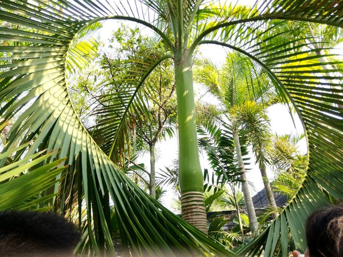 Love of the tree Tree Tropical Climate Palm Tree Plant Leaf Growth Green Color Plant Part Palm Leaf Nature Beauty In Nature Day Sky Sunlight Outdoors Tree Trunk Low Angle View Trunk Leaves
