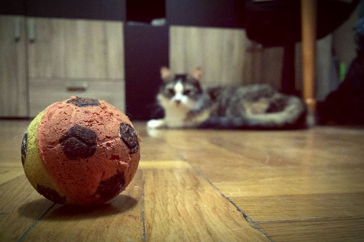 Cat Catball Catoftheday Playtime Seriously Seriousface Like A Catwoman)))
