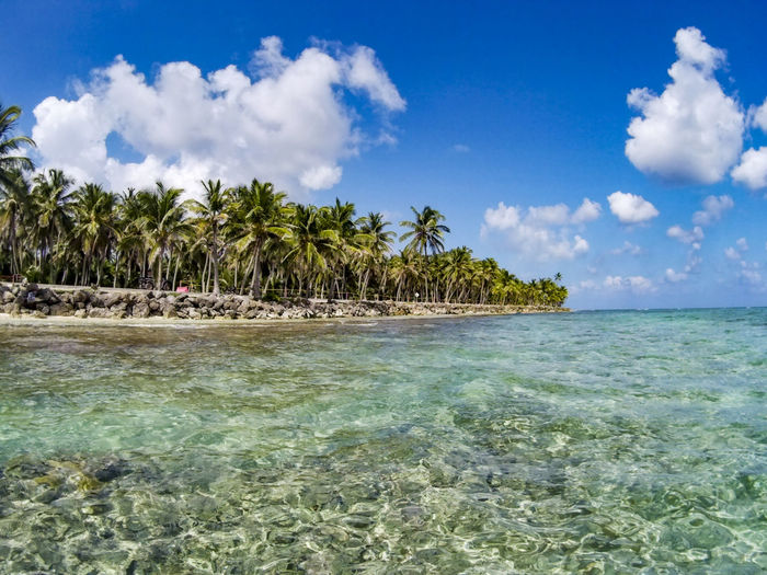 Scenic View Of Palm Trees On Beach Against Blue Sky