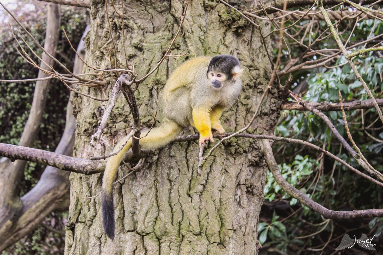 tree, animal wildlife, animal themes, animal, animals in the wild, one animal, mammal, plant, primate, branch, monkey, focus on foreground, vertebrate, nature, no people, sitting, forest, tree trunk, trunk, day, outdoors