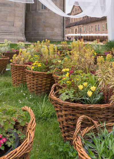 View of flowering plants in basket on field