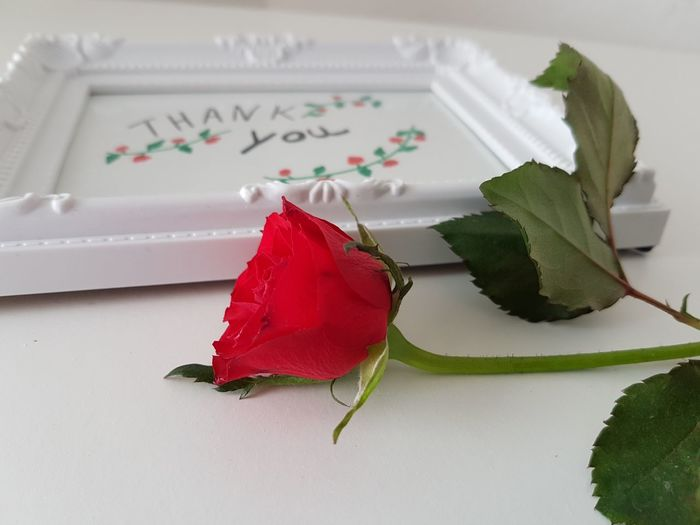 Thank You Picture Frame Rosé Seasonal Spring Flowers Appreciate Love Note Cards Season  Mother Thank You Card Lovely Heart Laying Romantic❤ Friendship Friend Nature Roses Studio Shot Celebration Red Flower White Background Close-up