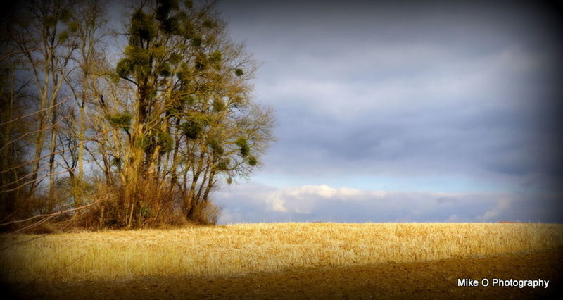 Agriculture Beauty In Nature Cereal Plant Cloud - Sky Day Field Growth Landscape Nature No People Outdoors Rural Scene Scenics Sky Storm Cloud Tranquil Scene Tranquility Tree Wheat