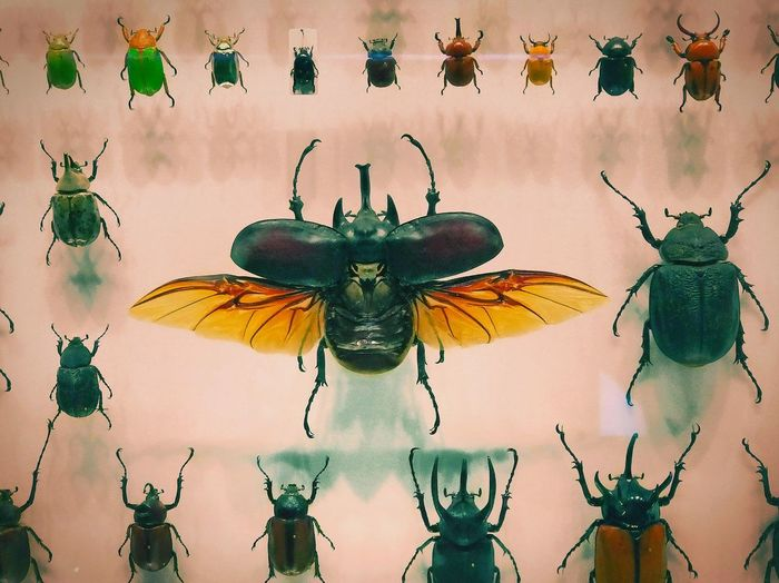 Insect Multi