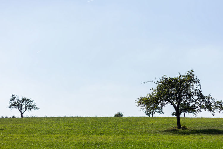 Agriculture Bare Tree Beauty In Nature Branch Clear Sky Day Field Grass Green Color Growth Landscape Lone Nature No People Outdoors Rural Scene Scenics Sky Tranquil Scene Tranquility Tree