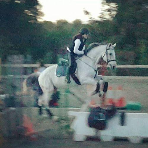 Horse Littlejump Horsegirl Equine Jumping Fast Beauty Tarantino Horselovers Horseadict