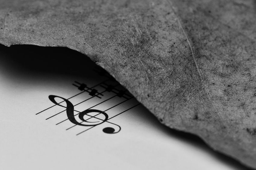 Backgrounds Close-up Dry Leaves G Clef Harmony Indoors  Macro Melody Music Music Brings Us Together Music Is My Life Music Notes Paper Rhythm Studio Shot TAB Treble Clef