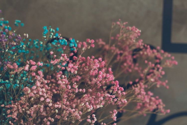 Plant Growth Flower Flowering Plant Beauty In Nature Freshness Pink Color Fragility Selective Focus Vulnerability  Close-up Day No People Nature Focus On Foreground Outdoors Petal Blossom Botany Springtime Flower Head Lilac Cherry Blossom