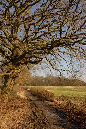 Country Trekking Countryside Country Life Country Walks Country Trails Great Outdoors Woods WoodLand Tree Trees Tree Branches Meadow Outdoor Photography Outdoor Life Nikon Photographer