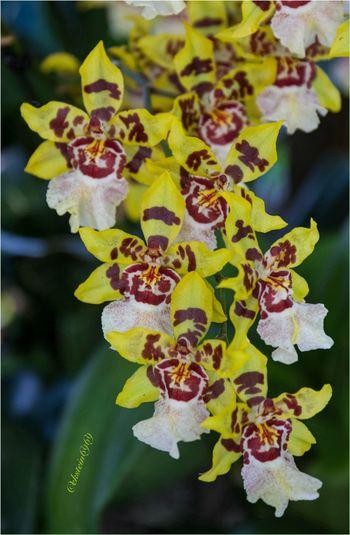 Macroclique Flowerporn Orchids HDR Collection