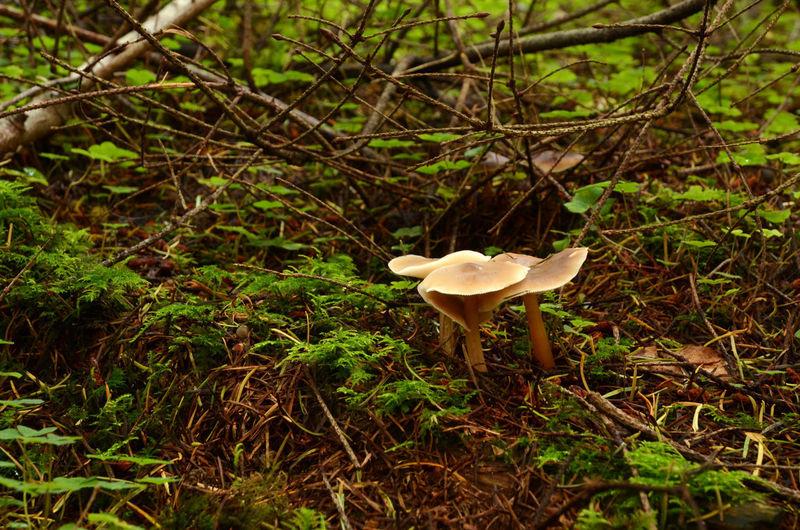 Fungus Mushroom