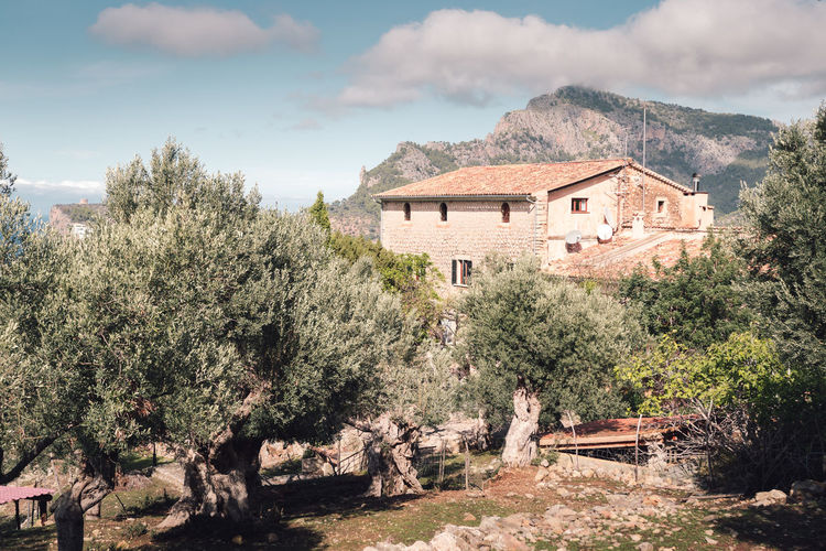 olive tree grove at Deià, Mallorca, Spain Architecture Building Exterior Built Structure Day DEIA DEIA House Mallorca No People Olive Olive Grove Olive Tree Olive Tree Blue Sky Olive Tree Landescape Olive Tree Shadow Olive Trees Outdoors Sky SPAIN Tree