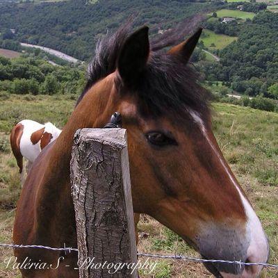 Holliday for pony❤️ Pony Horse Enjoying Life Self Portrait