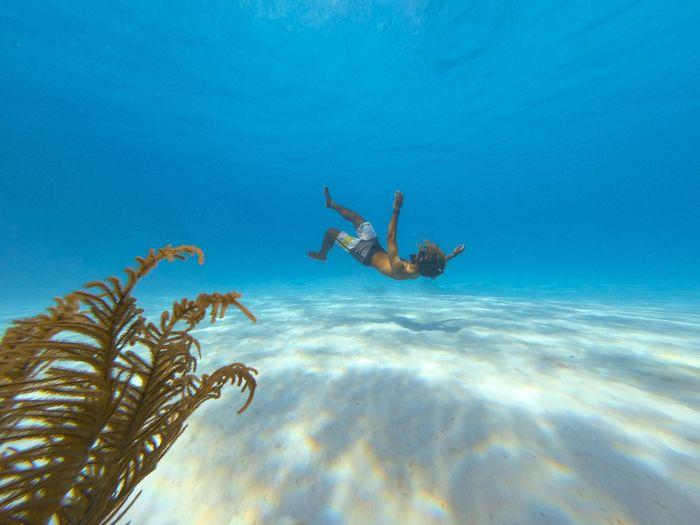 👎The freefall🏊♂️~ Godscreation Enjoying Gods Creation Jesus Is King Apnea Freediving Underwater UnderSea Sea Life Scuba Diving Water Sea Underwater Blue Beach Sand Coral Reef Underwater Diving Soft Coral Snorkeling