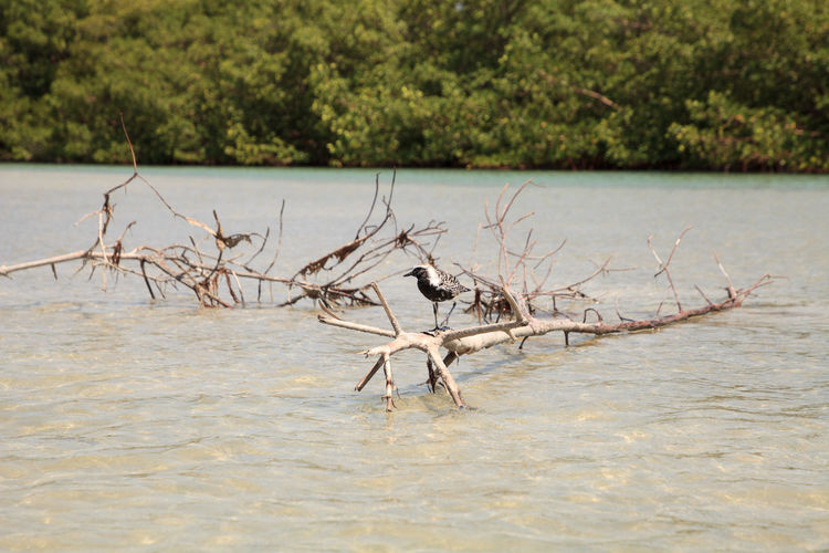 View of driftwood in river