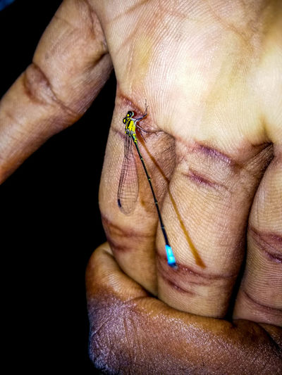 Close-up of cropped hands with damselfly
