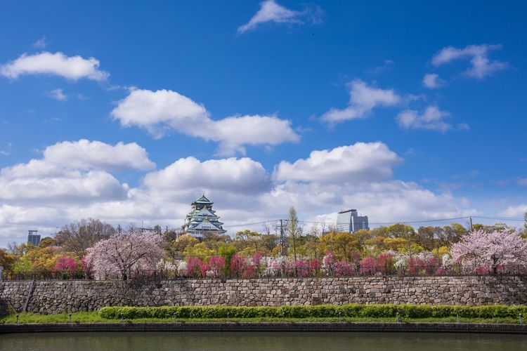 雨上がりの大阪城公園 桃満開 Japan Photography OSAKA Japan Peach Blossom Peach Tree Flower Tree Flowerbed Springtime History Sky Cloud - Sky Plant Cherry Blossom Blossom Cherry Tree