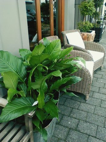 Chair Plant High Angle View No People Leaf Day Outdoors Green Leaves Wood - Material Concrete Art Deco Style EyeEmNewHere Potted Plant Modern Life